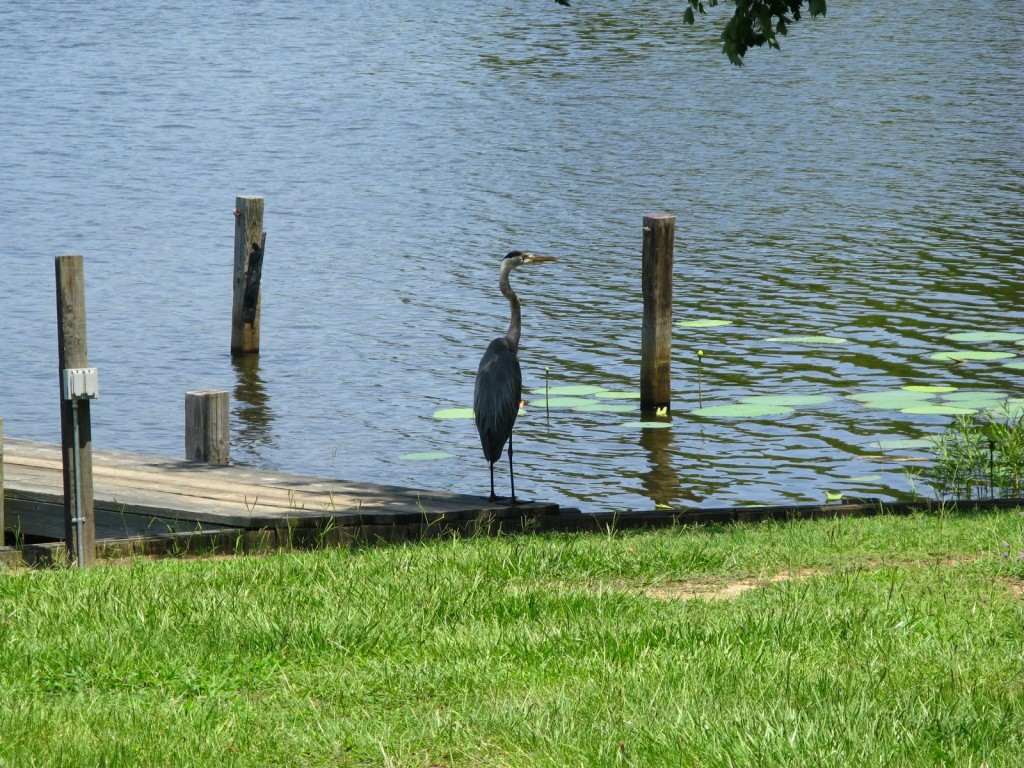 Wildlife at Lake Marion
